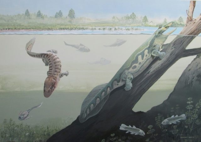 A reconstruction by the Centre of Excellence in Palaeosciences of the University of the Witwatersrand showing Tutusius and Umzantsia