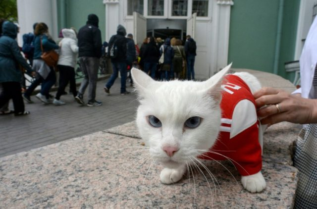Achilles the cat, one of the State Hermitage Museum mice hunters, will double as Russia's official soothsayer during the World Cup