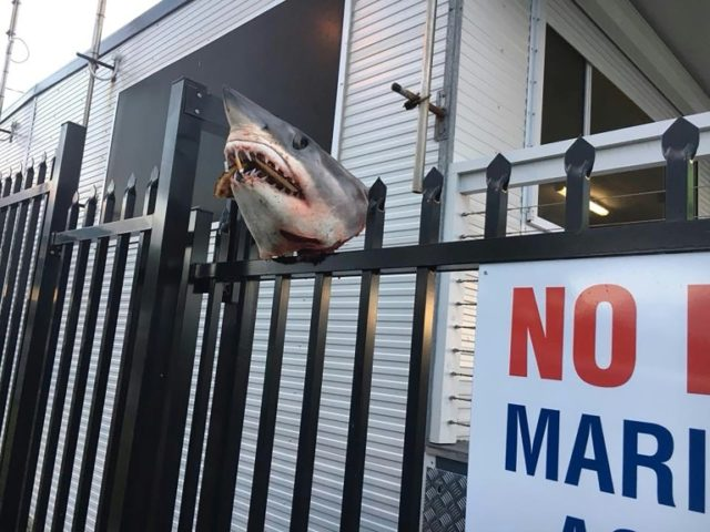 The severed shark head was stuffed with cigarette butts and ocean debris