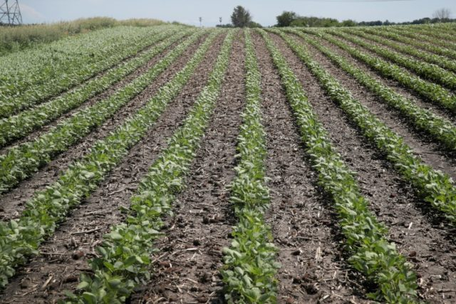 Soybeans are a key US export to China, an economic tie that makes the trade back-and-forth between the US and China a source of anxiety throughout the American farm belt