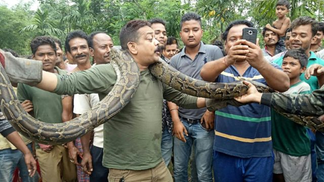 Forest ranger Sanjay Dutta wrapped the 40-kilogramme python around his neck and posed for pictures with stunned villagers