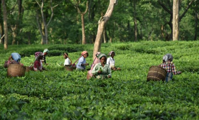 Indian tea farmers, many of them women, are scraping a living, Oxfam says