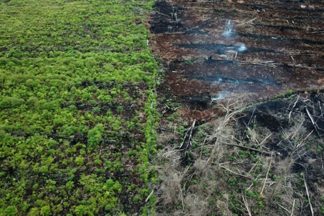 This aerial photo taken on March 3, 2018 shows a protected area of the Rawa Singkil wildlife reserve in South Aceh, which is being burnt in preparation for the opening of a new palm oil plantation