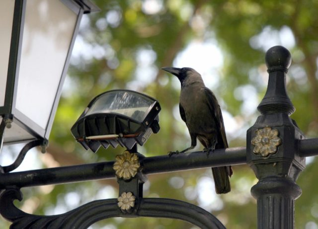 'Put simply, crows can reverse engineer tool designs using only a mental image of that tool'