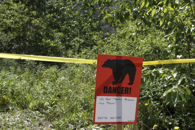 Police: Bear that mauled searcher likely killed Alaska hiker
