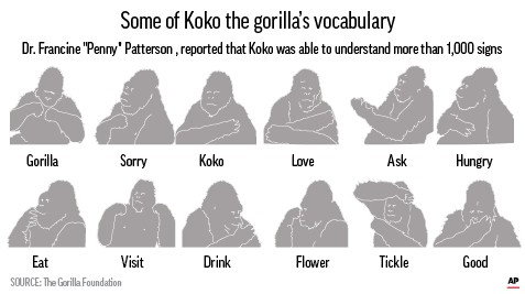 KOKO SIGN LANGUAGE