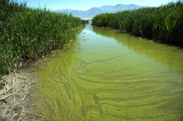 Oregon water scare: Algae blooms happening more often