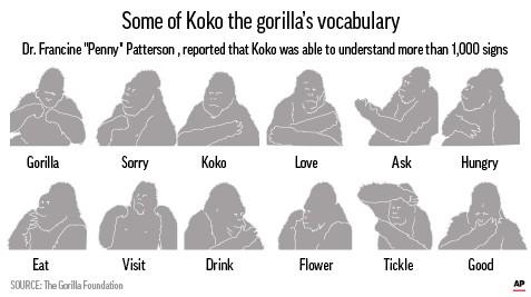 KOKO SIGN LANGUAGE