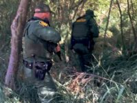 Laredo Sector Border Patrol agents move to rescue migrant who was being drowned in the Rio Grande River by an armed group from Mexico. (Photo: U.S. Border Patrol/Laredo Sector)