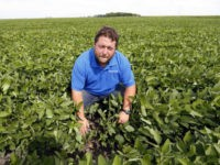 In this July 18, 2018 photo, soybean farmer Michael Petefish poses in his soybean field at his farm near Claremont in southern Minnesota. American farmers have put the brakes on unnecessary spending as the U.S.-China trade war escalates, hoping the two countries work out their differences before the full impact …