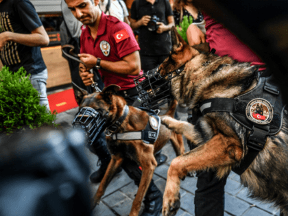 Police officers with dogs walk in the streets of Istanbul on July 1, 2018, after Turkish authorities banned the annual Gay Pride Parade for a fourth year in a row. - Around 1,000 people gathered on a street near Istiklal Avenue and Taksim Square where organisers wanted to originally hold …