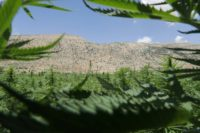 Lebanon bans growing, selling, and consuming cannabis, but the underground trade developed over decades into a multi-million dollar industry