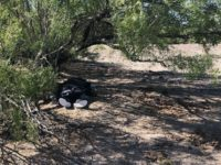 Laredo Sector Border Patrol agents find the remains of an illegal alien on a ranch near Freer, Texas. (Photo: U.S. Border Patrol/Laredo Sector)
