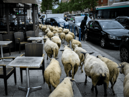 French Police Seize Dozens of Sheep Hidden in Garage Ahead of Islamic Ritual Slaughter Festival
