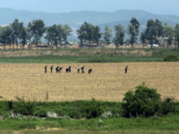 North Korea is experiencing drought as temperatures on the Korean Peninsula reach record highs. Photo by Stephen Shaver/UPI