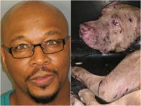 Police Shut Down Alabama Dog Fighting, Saving Seventeen Animals