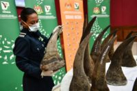 The $12-million rhino horn bust at Kuala Lumpur airport is the biggest ever in Malaysia's history