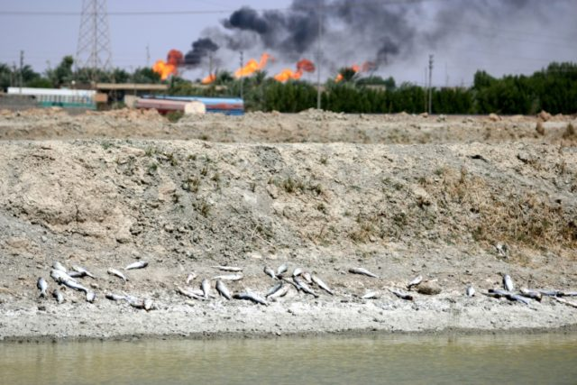 Dead fish lie on the bank of a reservoir at a fish farm north of Basra in southern Iraq with burning oil fields in the background