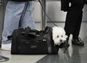 Southwest limits emotional support animals to cats, dogs
