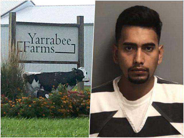 Yarrabee Farms-illegal alien