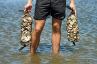 A member of the Billion Oyster Project places oysters in the waters near New York's Bush Terminal Park
