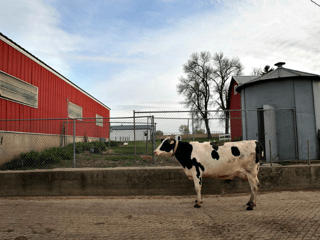 American Dairy Farm