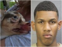 "Johansen Concepcion De La Ros, 19, of Miami, was arrested Saturday after police said he shot and killed a 8-month-old puppy with a ""sniper rifle"" from a second-floor balcony."