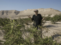 In this Monday, Sept. 17, 2018 photo, Guy Erlich shows off his farm in Almog, an Israeli settlement and kibbutz near the northwestern shores of the Dead Sea in the Jordan Valley, in the West Bank. Erlich is cashing in by producing exotic honey from a rare tree that produces …