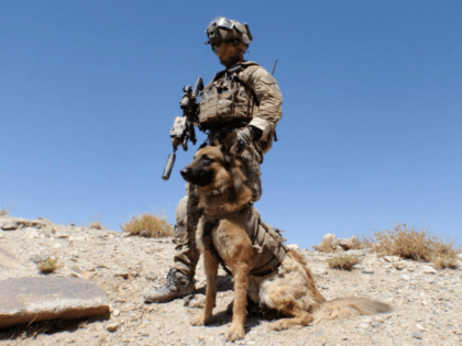 Australian Army special operations military working dog 'Kuga' from the Special Air Service Regiment (SASR) was awarded the Dickin Medal for gallantry by British charity the People's Dispensary for Sick Animals in a ceremony at the Australian War Memorial in Canberra on Friday, 26 October 2018.