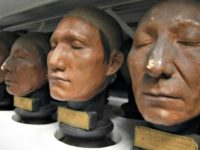 Casts of Native American heads from the 19th century that are part of the phrenology collection at the Museum of Man (Musee de l'Homme) in Paris.