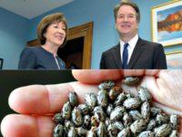susan-collins-kavanaugh, Castor Beans-