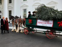 Donald and Melania Trump Welcome White House Christmas Tree