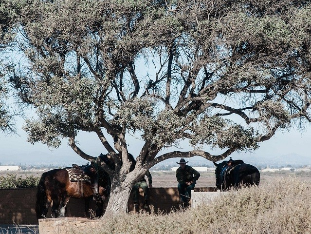 US Border Patrol take a break with their horses underneath a tree at Friendship Park in San Diego, California near the border fence that divides the US and Mexico on November 16, 2018. - The Central American migrant caravan trekking toward the United States converged on the US-Mexican border on …