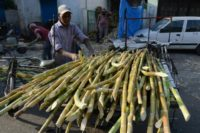 India has been blamed by Australia and other producers of driving down the price of sugar cane