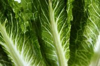 CDC Warns Against Eating Romaine Lettuce After E. coli Outbreak Sickens 32 People