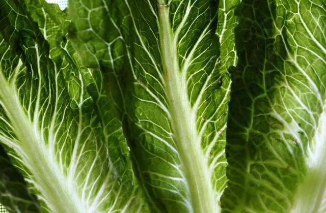 US issues health alert on romaine lettuce