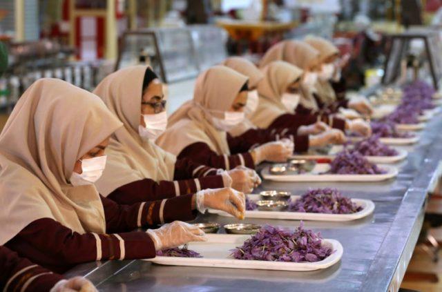 Iran produces more than 90 percent of the world's saffron