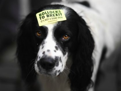 LIVERPOOL, ENGLAND - SEPTEMBER 23: Demonstrator's dog is seen on the March For The Many on September 23, 2018 in Liverpool, England. The March For The Many is calling for a people's vote on the final outcome of the government's Brexit negotiations. (Photo by Jeff J Mitchell/Getty Images)