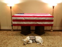 Sully, a golden Labrador, began his final mission as a service dog to former President George H.W. Bush on Sunday, sleeping next to the 41st president's casket in a heartwarming tribute.