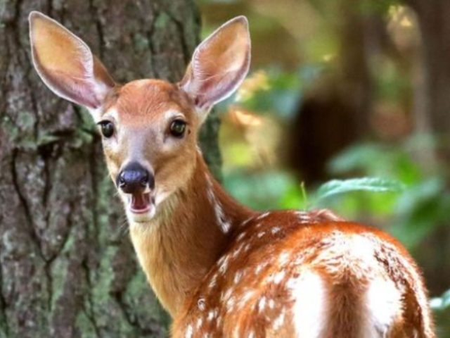 Deer poacher forced to repeatedly watch 'Bambi' whilst in prison
