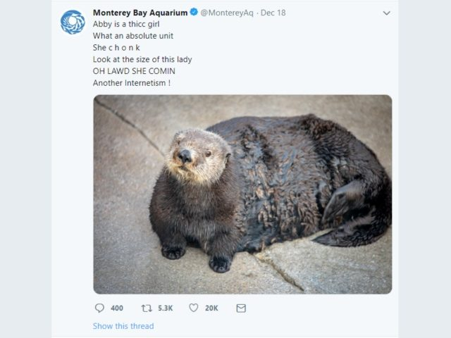 Aquarium Apologizes for Calling Otter Fat in 'Problematic... African American Vernacular'