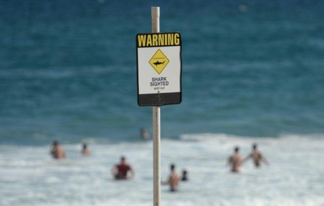 Research shows dramatic impact of Australian shark culls