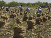 South Texas farm workers