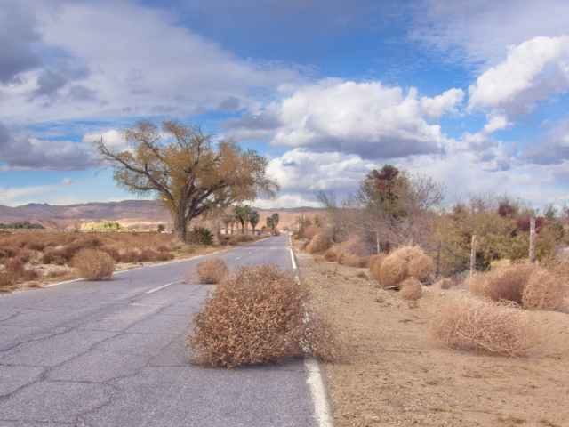 Tumbleweeds on a desert road