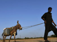 A Pakistani man walks with his donkey carrying water cans after filling them from a leaking water pipeline in Karachi on March 21, 2017, ahead of World Water Day. International World Water Day is marked annually on March 22 to focus global attention on the importance of water. / AFP …