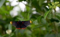 Butterflies, the unlikely victims of Trump's border wall