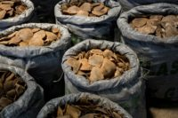 Hong Kong failing to tackle wildlife smuggling epidemic: study