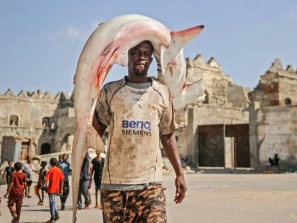 Fishing of sharks and rays is common in Liberia and they can be seen in port markets around Africa, such as in Somalia's capital here
