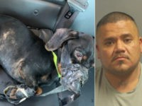Police: Animal Abuser Thought Dog Was Spy for Cops