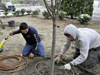 H2-B Visa Landscape Workers